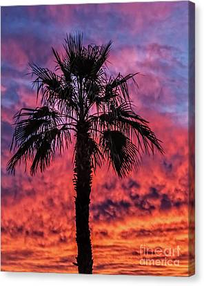 Canvas Print featuring the photograph Palm Tree Silhouette by Robert Bales