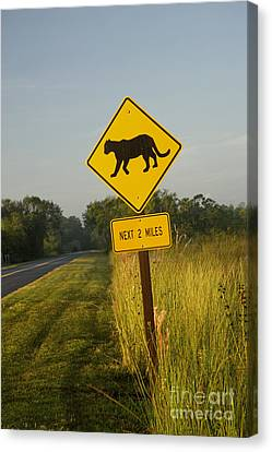 Collier Canvas Print - Panther Crossing Road Sign by Inga Spence