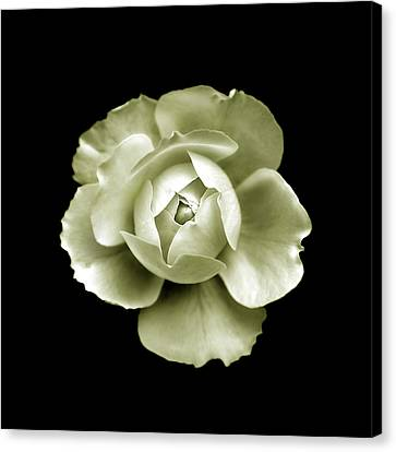 Canvas Print featuring the photograph Peony by Charles Harden