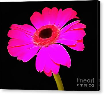 Perfectly Pink  Canvas Print by Krissy Katsimbras