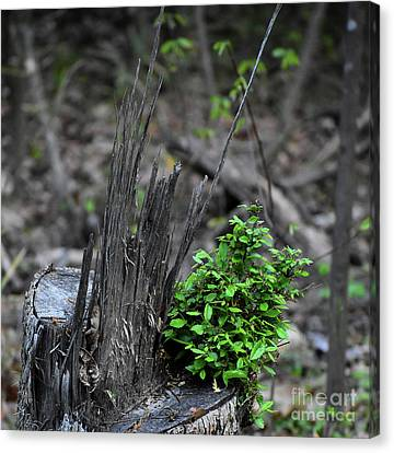 Canvas Print featuring the photograph Persistence by Skip Willits