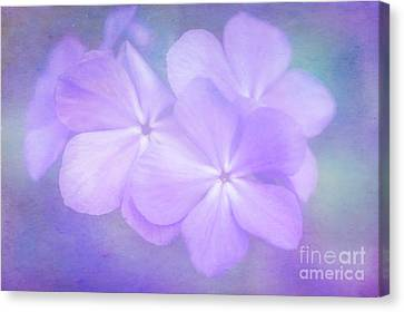 Phlox In The Evening Light Canvas Print