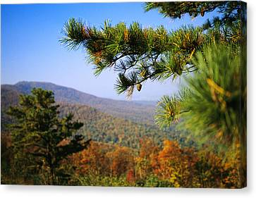 Pine Tree And Forested Ridges Canvas Print by Raymond Gehman
