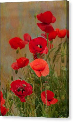 Poppies Canvas Print by Carolyn Dalessandro