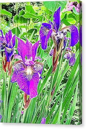 Purple Irises Canvas Print by Anne Sands