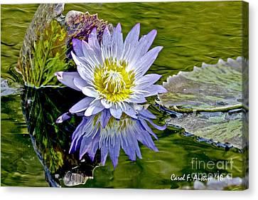 Purple Water Lily Pond Canvas Print by Carol F Austin