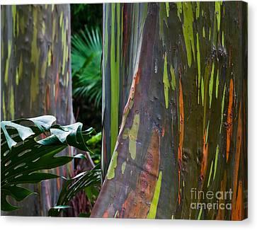 Rainbow Eucalyptus Canvas Print by Frank Wicker