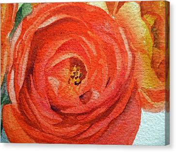 Ranunculus Close Up Canvas Print by Irina Sztukowski