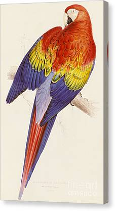 Macaw Canvas Print - Red And Yellow Macaw by Edward Lear