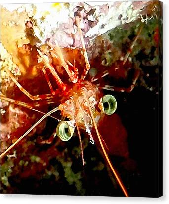 Red Night Shrimp Canvas Print