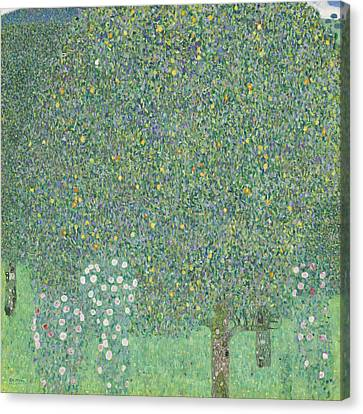 Rosebushes Under The Trees Canvas Print