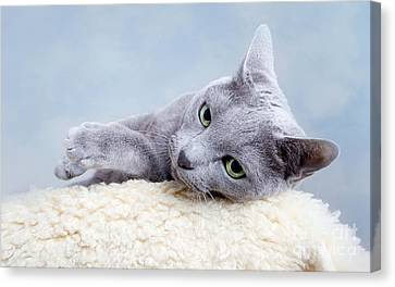 Curious Canvas Print - Russian Blue Cat by Nailia Schwarz