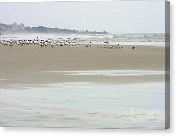 Beach Theme Decorating Canvas Print - Seabirds On Hilton Head Shoreline by Angela Rath