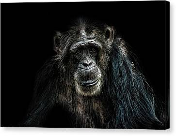 Smile Canvas Print by Martin Newman
