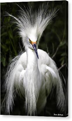 Snowy Egret Canvas Print by Fran Gallogly