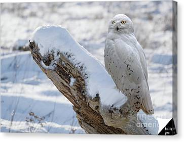 Canvas Print featuring the photograph Snowy Owl by Jim  Hatch