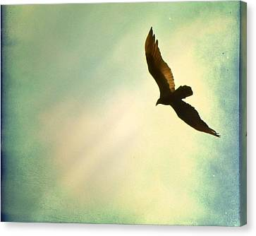 Soaring Canvas Print by Amy Tyler