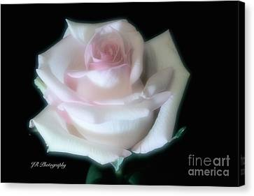 Soft Pink Rose Bud Canvas Print by Jeannie Rhode