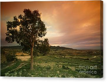 Spanish Landscape Canvas Print by Angel  Tarantella
