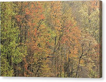 Dogwood Lake Canvas Print - Spring Forest In Bloom by Dean Pennala
