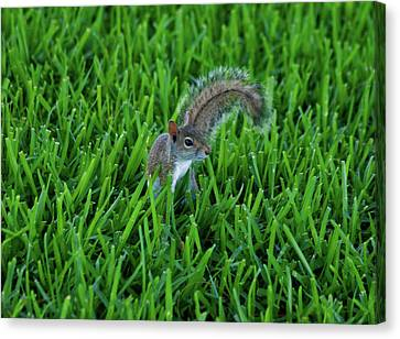 Canvas Print featuring the photograph 2- Squirrel by Joseph Keane