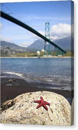 Starfish Stanley Park Vancouver Canvas Print by Pierre Leclerc Photography