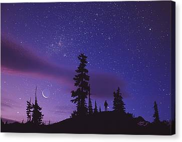 Starry Sky Canvas Print by David Nunuk