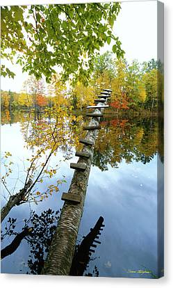 Stepping Tree - Northwoods Wisconsin Canvas Print