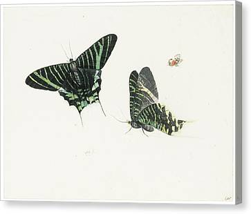 Studies Of Two Butterflies Canvas Print by Anton Henstenburgh