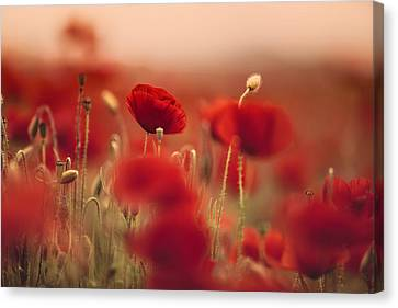 Headache Canvas Print - Summer Poppy Meadow by Nailia Schwarz