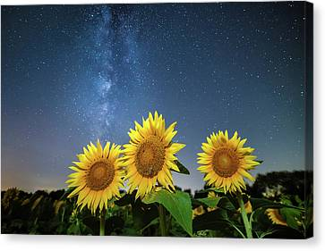 Sunflower Galaxy Canvas Print by Ryan Heffron
