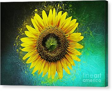 Seed Canvas Print - Sunflower by Ian Mitchell