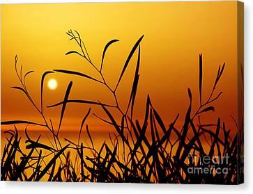 Sunset Canvas Print by Carlos Caetano