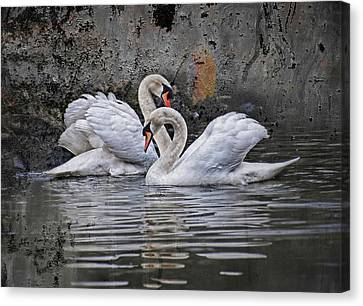 Tango Of The Swans Canvas Print by Joachim G Pinkawa