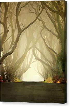 The Dark Hedges Canvas Print by Pawel Klarecki