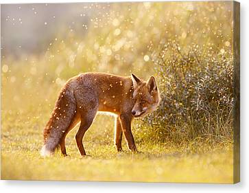 Fox Canvas Print - The Fox And The Fairy Dust by Roeselien Raimond