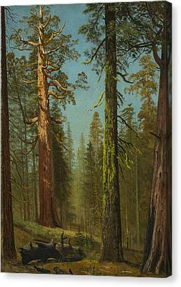 The Grizzly Giant Sequoia, Mariposa Grove, California Canvas Print by Albert Bierstadt