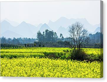 The Rape Flowers Field Scenery Canvas Print