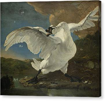 The Threatened Swan Canvas Print