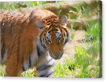 The Tiger Canvas Print by Dan Sproul