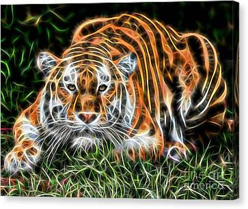 Tiger Collection Canvas Print