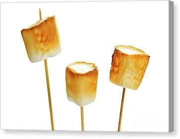 Toasted Marshmallows Canvas Print