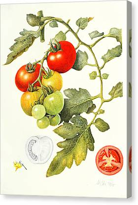 Tomatoes Canvas Print by Margaret Ann Eden