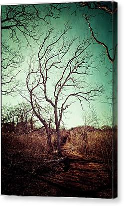 Tree Canvas Print by Frank Winters