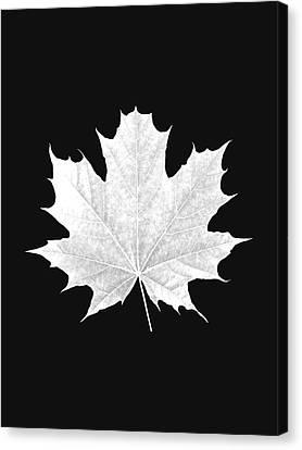 Tree Leaf Art Canvas Print by Marvin Blaine