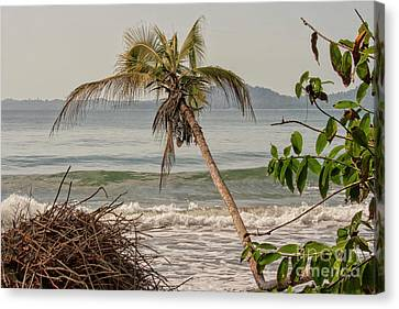 Canvas Print - Tropical Beach by Patricia Hofmeester
