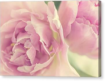 Tulips Canvas Print by Cindy Grundsten