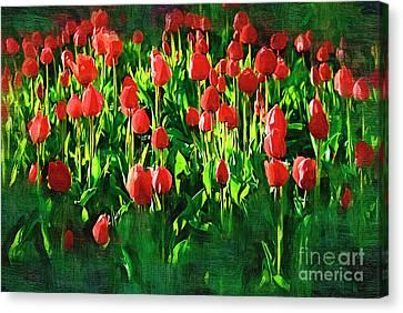 Tulips Canvas Print by Hristo Hristov
