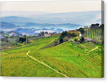 Pastoral Vineyard Canvas Print - Tuscany Landscape by Dutourdumonde Photography