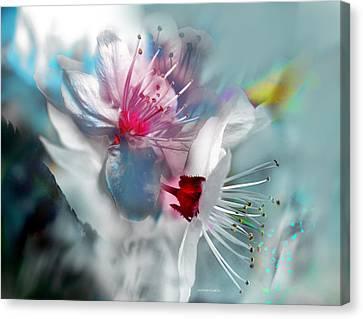 Viento De Primavera Canvas Print